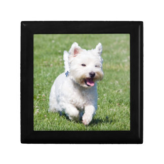 West Highland White Terrier, west dog cute photo Gift Box