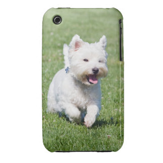 West Highland White Terrier, westie dog cute photo iPhone 3 Case-Mate Case