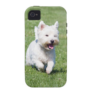 West Highland White Terrier, westie dog cute photo Vibe iPhone 4 Cases