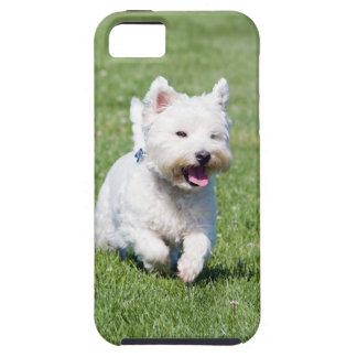 West Highland White Terrier, westie dog cute photo iPhone 5 Cases