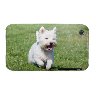West Highland White Terrier, westie dog cute photo Case-Mate iPhone 3 Case