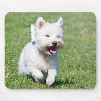 West Highland White Terrier, westie dog cute photo Mouse Pads