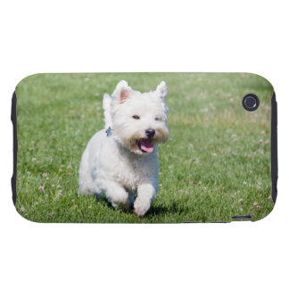 West Highland White Terrier, westie dog cute photo Tough iPhone 3 Cover