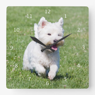 West Highland White Terrier, westie dog cute photo Wall Clocks