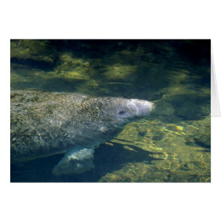 West Indian (Florida) Manatee-breathing Greeting Card