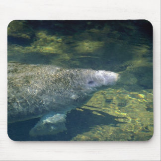 West Indian Florida Manatee-breathing Mouse Pads