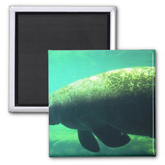 West Indian (Florida) Manatee-underwater Refrigerator Magnets