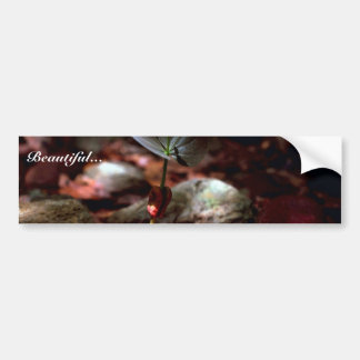 West Indian Mahogany Seedling Bumper Stickers