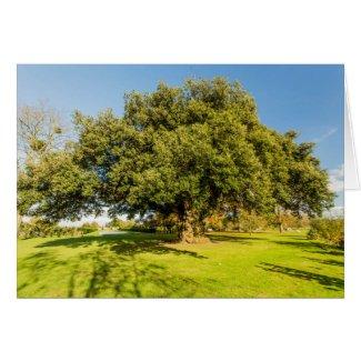 Westbury Court Garden Oak Tree Card