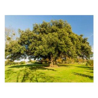 Westbury Court Garden Tree Postcard