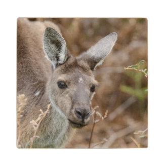 Western Australia, Perth, Yanchep National Park Wood Coaster