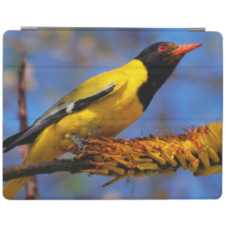 Western Black-Headed Oriole iPad Cover