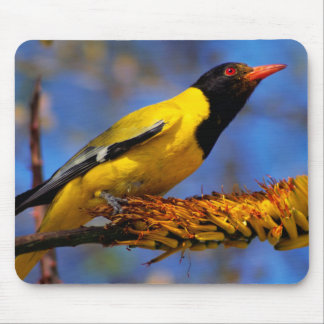 Western Black-Headed Oriole Mouse Pad