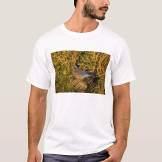 Western bluebird, Sialia mexicana, adult male T-Shirt