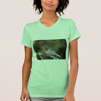 Western bluebird Sialia mexicana with spider Ca Tee Shirts