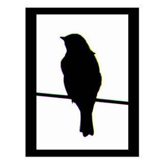 Western Bluebird silhouette Postcard