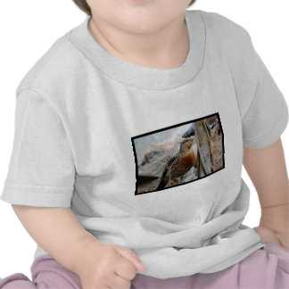 Western Capercaillie Tee Shirts