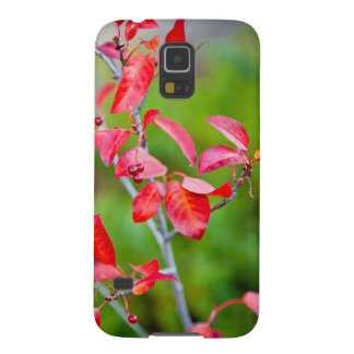 Western Choke Cherry (Prunus Virginiana) In Fall Galaxy S5 Case