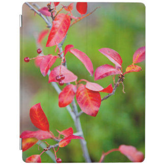 Western Choke Cherry (Prunus Virginiana) In Fall iPad Cover