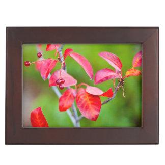 Western Choke Cherry (Prunus Virginiana) In Fall Keepsake Box