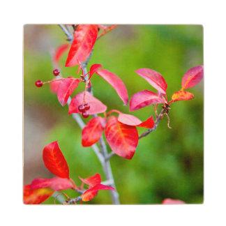 Western Choke Cherry (Prunus Virginiana) In Fall Wood Coaster
