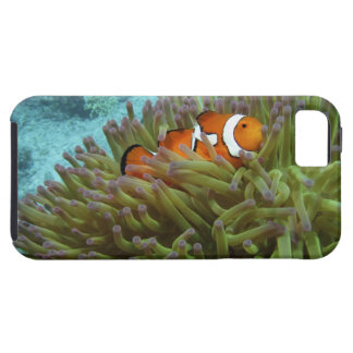 Western Clownfish ( Amphiprion ocellaris ), in iPhone 5 Covers