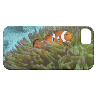 Western Clownfish ( Amphiprion ocellaris ), in iPhone 5 Case