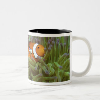 Western Clownfish ( Amphiprion ocellaris ), in Two-Tone Mug
