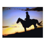 Western Cowboy Sunset Silhouette Postcard