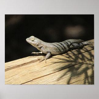 Western Fence Lizard 14x11 Archival Matte Poster