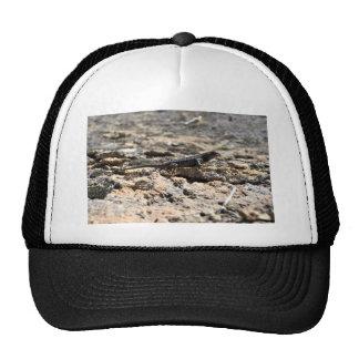 Western Fence Lizard Hat