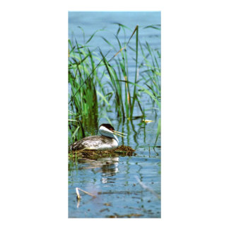 Western Grebe on Nest Custom Rack Cards
