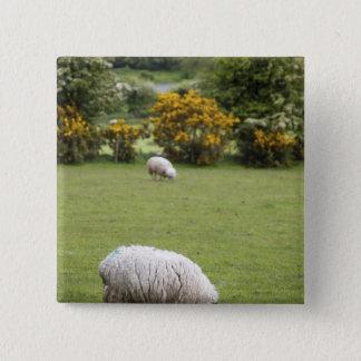 Western Ireland, a full fleeced black-faced 15 Cm Square Badge