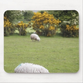Western Ireland, a full fleeced black-faced Mouse Mat