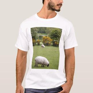 Western Ireland, a full fleeced black-faced T-Shirt