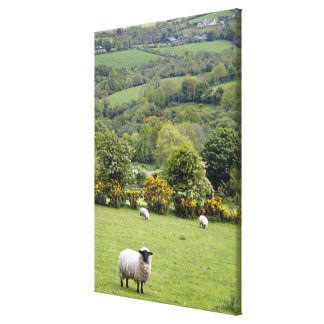 Western Ireland, Dingle Peninsula, broad Canvas Print