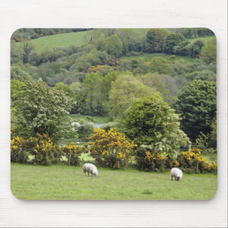 Western Ireland, Dingle Peninsula, broad Mouse Mat