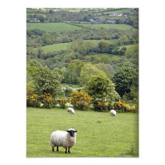 Western Ireland, Dingle Peninsula, broad Photo Print