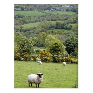 Western Ireland, Dingle Peninsula, broad Postcard