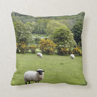 Western Ireland, Dingle Peninsula Cushion