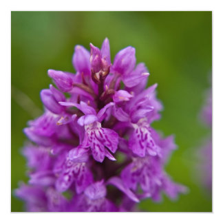 Western Marsh Orchid 13 Cm X 13 Cm Square Invitation Card