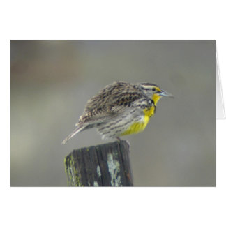 Western Meadowlark Card