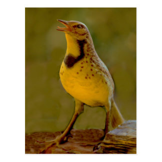 Western Meadowlark (Kansas, Montana, Nebraska) Postcard
