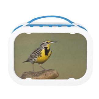 Western Meadowlark Lunch Box