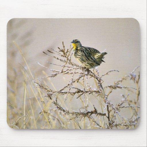 Western Meadowlark Mouse Pad