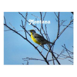 Western Meadowlark Postcard