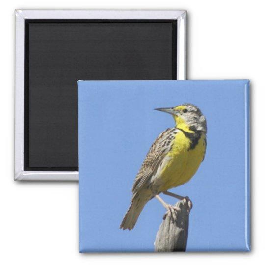 Western Meadowlark Square Magnet