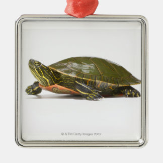 Western painted turtle (Chrysemys picta bellii), Christmas Ornament