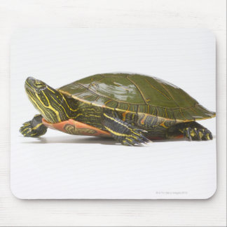 Western painted turtle (Chrysemys picta bellii), Mouse Mat