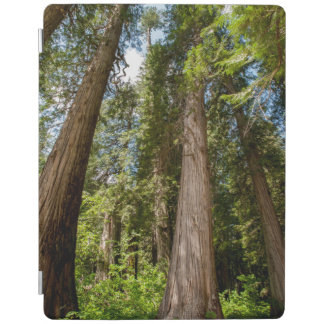 Western Red Cedar Trees iPad Cover